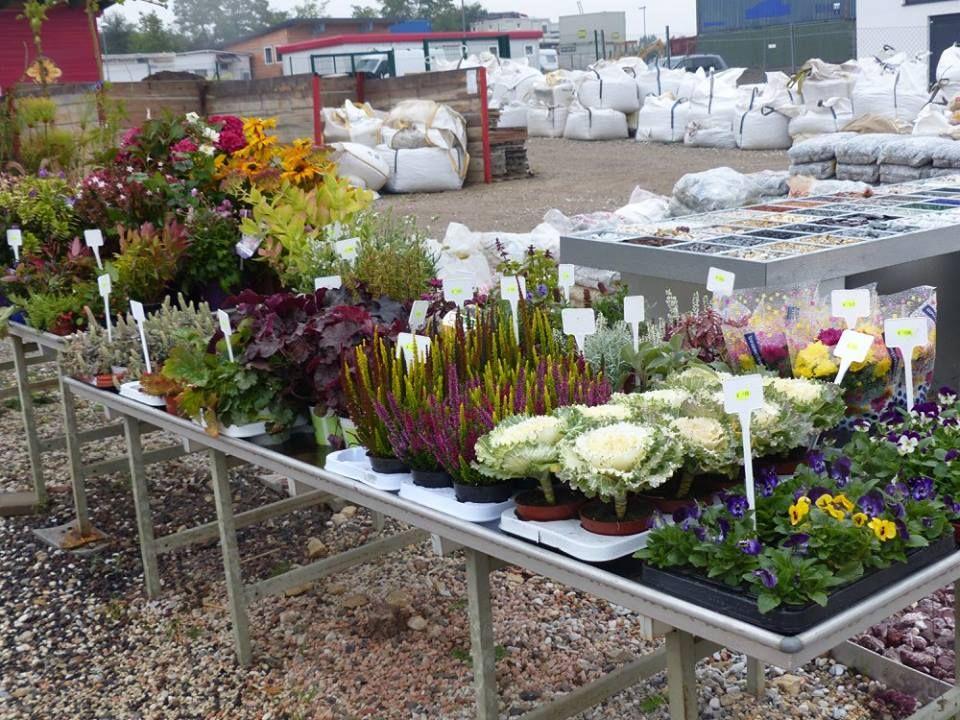 Herbst-Pflanzen am Lagerplatz